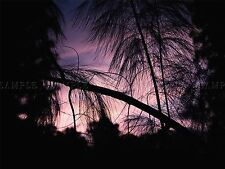 PHOTO COMPOSITION SILHOUETTE PINE TREES PURPLE SKY ASIAN POSTER PRINT BMP10288