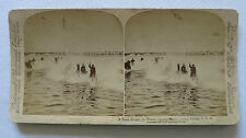 Spanish American War, A Dash Through the Water - Cavalry Horses, Camp Tampa