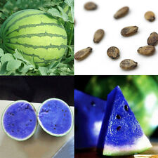 10pcs Rare Blue Watermelon Seeds Fruit Vegetable Organic Plant Seed Garden Dec
