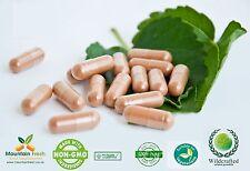 FINOCCHIO SEMI BIOLOGICI Foeniculum vulgare PURO erbe capsule 200 x 200 mg 200 mg