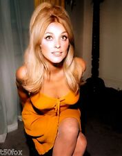 1960-1969 SHARON TATE color glamour period photo (Celebrities & Musicians)