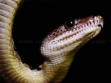 NATURE PHOTO SNAKE HEAD SERPENT REPTILE COOL POSTER ART PRINT BB190A