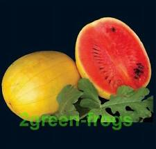 15 x Heirloom Watermelon Golden Midget  Seeds *UNIQUE*EXOTIC* AUSSIE SELLER