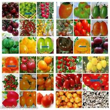 33Kind Tomato Seeds Black Purple Cherry Fruit Vegetable Total 100 seeds mixed
