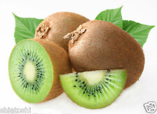Kiwi Fruit Seeds, 20  seeds #SF 8231#(Actinidia deliciosa), Best Yielding,