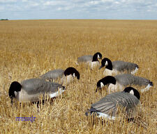 AVERY GREENHEAD GEAR GHG PRO GRADE LIFESIZE CANADA GOOSE SHELL DECOYS 6 NEW!