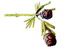 SEQUIOA LEAF & PINE CONE PIN/BROOCH BY MICHAEL MICHAUD SILVER SEASONS - 8840BZ