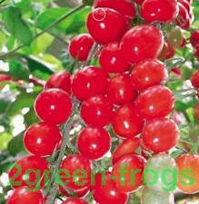 10 x Heirloom Cherry Red Tomato Seeds *UNIQUE*EXOTIC* AUSSIE SELLER
