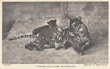 ZOO : Tigress and Cubs ,Whipsnade-ZOOLOGICAL SOCIETY OF LONDON