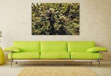 Stunning Poster Wall Art Decor Marijuana Grow Room Cannabis Hemp 36x24 Inches