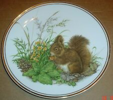 Edwardian Fine China Collectors Plate SQUIRREL