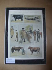 Genuine Hand Coloured Antique Print of The Birmingham Fat Stock Show by Ralph Cl