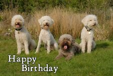Lagotto Romagnolo Dog Design A6 Textured Birthday Card BDLAGOTTO-1 by paws2print