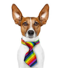 Mini Rainbow Pet Tie (Dogs / Cats) LGBT Gay and Lesbian Pride Pet Accessories