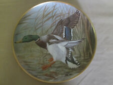 MALLARD collector plate BASIL EDE Waterbirds DUCK Birds WILDLIFE