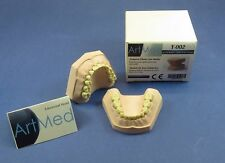 Plaster Dental Educational Training Jaw Mouth Ivorine Teeth Pediatric Model Mold