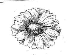 Dramatic DAISY! Giant UNMounted rubber stamp!
