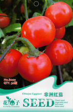 30 Original Pack Seeds Red Eggplant Seeds Solanum Integrifolium Organic B099