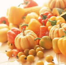 20Pumpkin Seeds Rare, Popular & Cute Color DIY Home Vegetable TT037