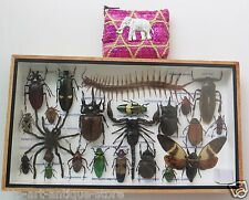 Real Mounted Insect Boxed Rare Insects Display Taxidermy Entomology Zoology FS