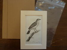 Gravure XIXè - BUFFON / PRETRE 1825 oiseaux- Grand Tangara -  passe-partout