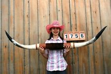 "STEER LONG HORNS MOUNTED 5' 3"" COW BULL SKULL TAXIDERMY LONGHORN LH1756"