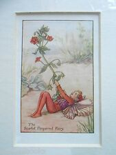 CICELY MARY BARKER - The Scarlet Pimpernel Flower Fairy - Vintage Mounted Print