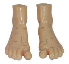 Human Feet Acupuncture Massage Model 17cm - One Right and One Left Foot