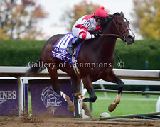 Songbird 2015 Breeders' Cup Juvenile Fillies 8x10 New!!!
