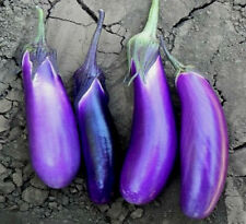 Organic 600 Seeds Purple Long Eggplant Seed Garden Edible Vegetable Bulk Seed