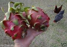 50 Seed Dragon Fruit Pitaya Pitahaya Hylocereus undatus Queen Of Th Night Cactus
