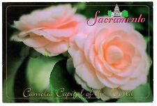Sacramento California Postcard Camelia Capital of the World Flowers Pink Unpost
