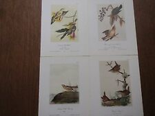 Lot of 40 Vintage Audubon Bird Prints - Warblers, Wrens, Buntings, Titmouse