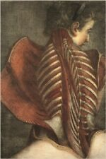 muscles of the back in a female ANATOMY POSTER gautier d'agoty 24X36 ART GEM