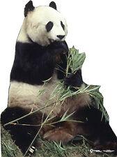 # 734 Panda Bär Höhe 155cm Pappaufsteller  Aufsteller Lebensgroß Figur Pappfigur