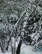 1950's Vintage 16x20 NATURE LANDSCAPE Winter Snow Abstract Photo By ELIOT PORTER