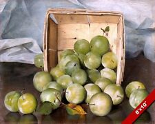 BASKET OF GREEN PLUMS FRUIT STILL LIFE BY DECKER PAINTING ART REAL CANVAS PRINT