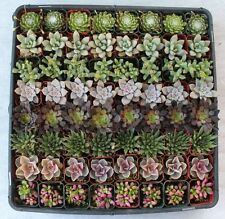 100  SUCCULENT WEDDING COLLECTION succulents plant party favors gifts