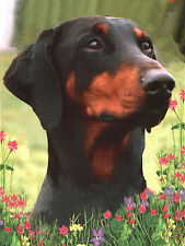DOBERMAN PINSCHER HEAD STUDY LOVELY DOG GREETINGS NOTE CARD