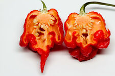 CAROLINA REAPER pure seeds