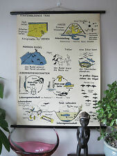 VINTAGE PULL DOWN SCHOOL WALL CHART OF  ANIMAL BEHAVIOUR BEES, BIRDS, BEETLES