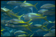 634029 Fish Under A Glass bottom Boat Cancun Mexico A4 Photo Print