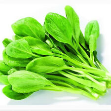 200PcsNatural Vegetable Seed Non-GMO Chinese Little Green Seeds Organic Plant 0o