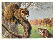 N°90 IMAGE CARD Wildkatze Wildcat Chat sauvage Felis silvestris Felis 30s