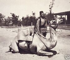 Anglo Egyptian Sudan Camel Soldier British Army 1910 5x4 inch Reprint Photo