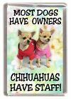 "Chihuahua (Smoothcoat) Dog Fridge Magnet ""..Chihuahuas Have Staff!"" by Starprint"