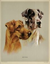 MABEL GEAR Vintage c.Early 1940's Halftone Print of Dogs GREAT DANES, P. & Co.