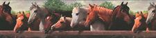 Beautiful Horses Close Up Wallpaper Border