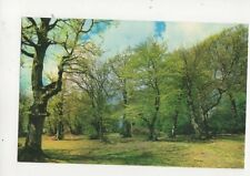 In The New Forest Hampshire Postcard 187b