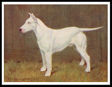 BULL TERRIER GREAT VINTAGE STYLE NAMED CHAMPION DOG PRINT POSTER